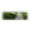 Path - Nature -