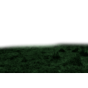 Grass - Priroda -