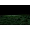 Grass - Natura -