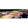 Path - Priroda -