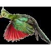 ptica bird - Životinje -