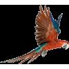 ptica bird - Animals -
