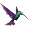 ptica bird - Animais -
