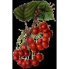 Fruit - Sadje -