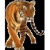 tiger - Animals -