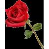 cvijet - Plants -