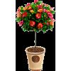 topiary plant - Natural -