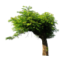 tree - Životinje -