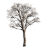tree - Predmeti -