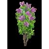 tree - Plantas -
