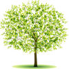tree - Rastline -