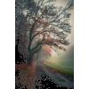 tree light field photo - Uncategorized -