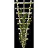 trellis - Plants -