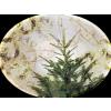 Bor / Tree - Plants -