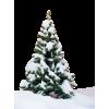 Bor / Tree - Plantas -