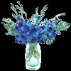 Cvijeće / Flowers - Plants -