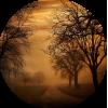 Drveće / Trees - Nature -