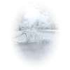 Forest Šuma - Nature -