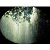 Kiša / Rain - Nature -