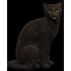 Mačka / Cat - Animals -