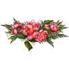 Ruže / Roses - Plants -