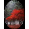 Trees / Drva - 自然 -