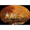 Trees / Drva - Narava -