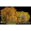 Šuma / Forest - Nature -
