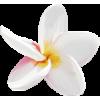 tropical - Plantas -