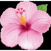 tropical flower - Otros -