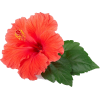 tropical flower - Uncategorized -