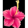 tropical flower - Uncategorized -