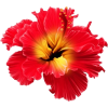 tropical flowers - Natural -