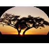 tubes trees - Natura -