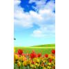 tulips - Nature -