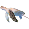 turtle - Nature -