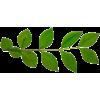 Twig Green Plants - Rośliny -