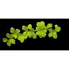 Twig Green Plants - Biljke -