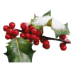 Twig Plants Red - 植物 -