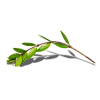 Twig Green Plants - Plantas -