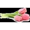 tylpani - Plantas -