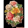 vintage flowers - Plants -
