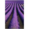 violet - Nature -