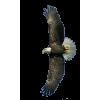 American Bald Eagle - Animals -