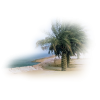 Beach Plaža - Nature -