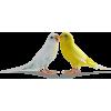 Birds In Love - Animals -