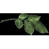 Branch Grana - Rośliny -