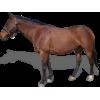 Brown Horse - Illustrazioni -