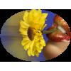 Flower Cvijet - 植物 -