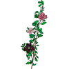 Flower Cvijet - Piante -